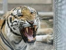 Tijger doodt medewerkster dierentuin Benidorm