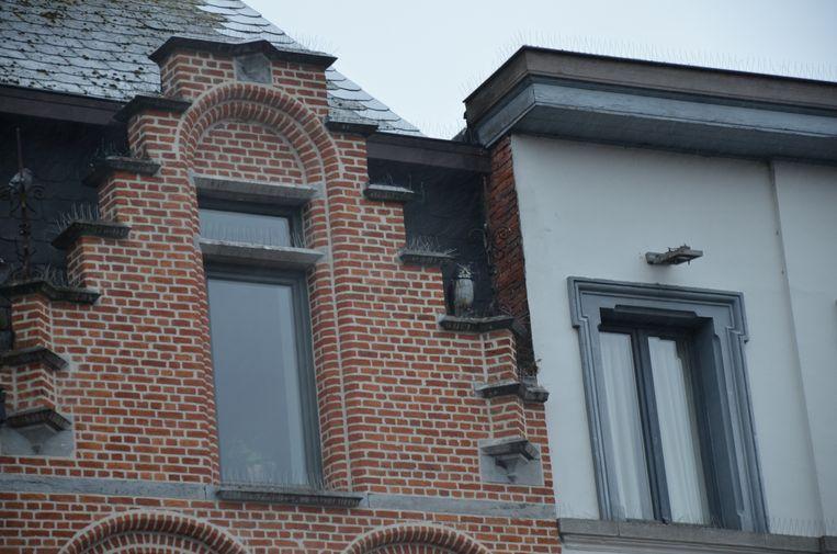 Ook de uil die de uitbaters van B&B Vienna op hun dak plaatsten, schrikt de duiven niet af.