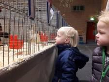Nut en Sport in Haaksbergen riskeert geen vogelgriep griep meer met vroege show