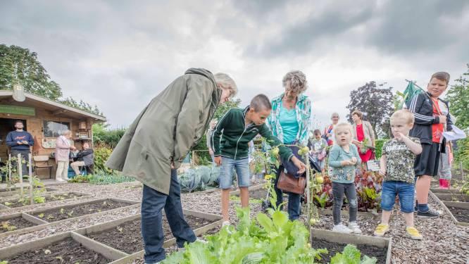 Jonge gidsen weten álles over de dorpsmoestuin in Ovezande: 'Deze tomatenplant is ziek, deze niet'