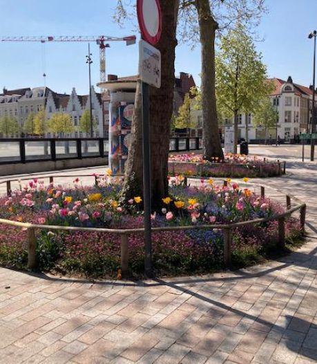 't Zand krijgt meer kleur: nieuwe bloemperken rond 41 bomen