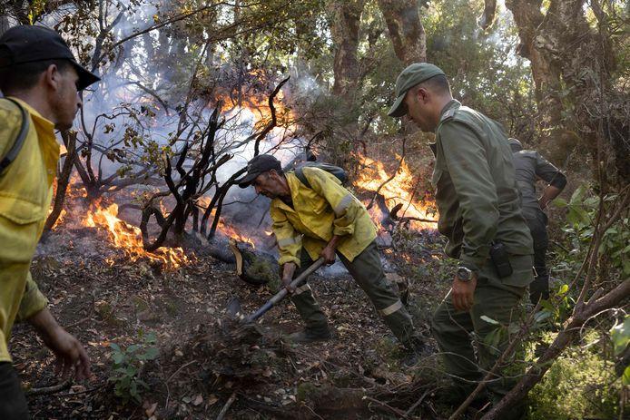 Marokkaanse brandweermannen en leden van de civiele bescherming proberen de vlammen te bedwingen in bosgebieden in de noordelijke regio Chefchaouen.