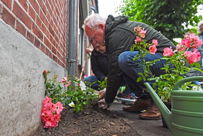 In Oosterhout zijn 39.198 tegels vervangen door groen.