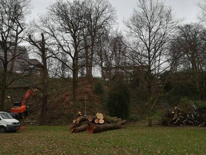 De bomenkap langs de stuwwal aan het Onderlangs, op 5 januari gesignaleerd door omwonenden.