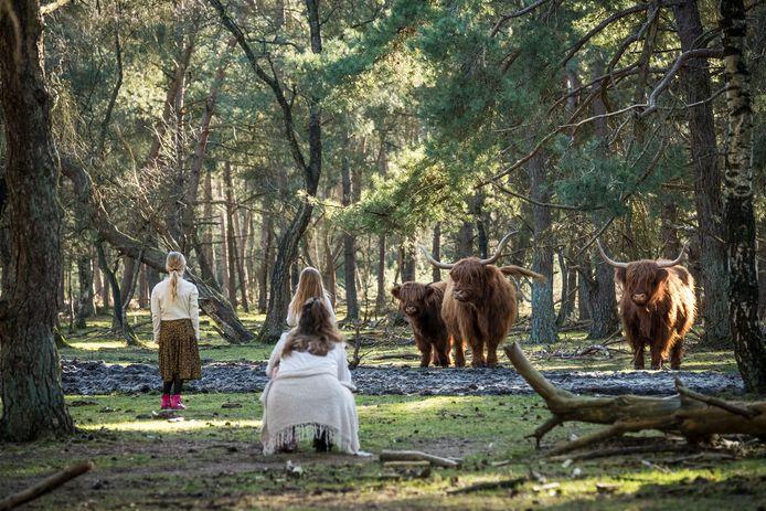 De hooglanders op de Wezepsche Heide zijn normaal gesproken absoluut ongevaarlijk, maar in deze tijd - als ze jongen hebben - is dat iets anders, waarschuwt burgemeester Tanja Haseloop van Oldebroek.