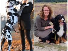 Nederland kocht in coronatijd massaal een huisdier, deze ondernemers profiteerden