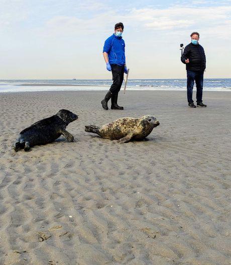 Le parc aquatique Sea Life Blankenberge relâche trois phoques