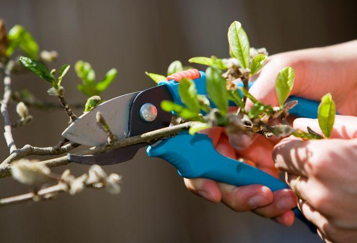 Het voorjaar leidt tot volle groene containers. Twente Milieu haalt tijdens de takkenronde het snoeihout gratis op.