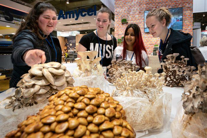 ROC-studenten beantwoorden in de Brabanthallen vragen over het kweken van paddenstoelen.