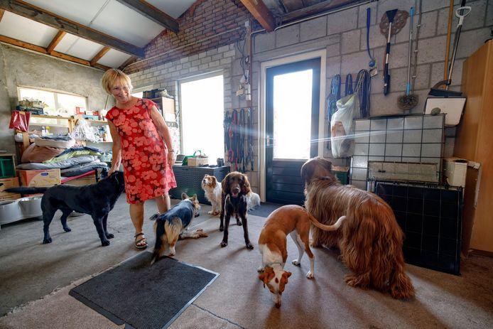 Hondenopvang In Huiselijke Kring,  Ria Bennink heeft het druk met de opvang van honden.
