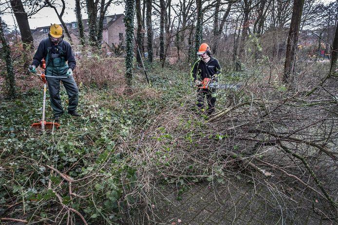 De struiken in de groenstrook aan de Singel worden gesnoeid door medewerkers van Arie Arts Boomverzorging uit Cuijk.