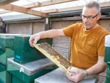 Hooikoortspatiënten komen in de knel door voorjaarshoning tekort