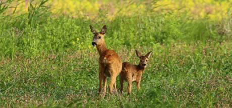 Help moeder specht en baby Bambi te overleven