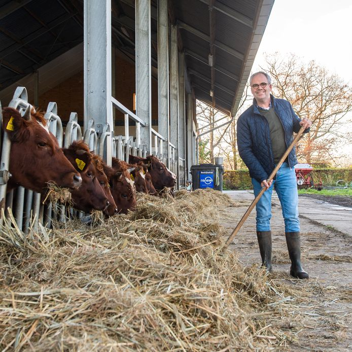 Emiel Anssems op de boerderij aan de Galgestraat onder Teteringen, met zijn Brandrode runderen zorgt hij voor 'extensieve begrazing' in de Lage Vuchtpolder.