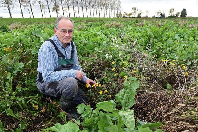 """Akkerbouwer én CDA-Statenlid Frank Kuijpers uit Ossenisse. ,,Ik heb bijvoorbeeld vlinderbloemen gezaaid om stikstof uit de lucht te halen."""""""