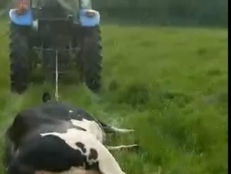 """""""Geen enkel dier is veilig bij hen"""": Raadkamer Dendermonde beslist dinsdag of boer uit Appelterre wordt doorverwezen na dierenmishandeling"""