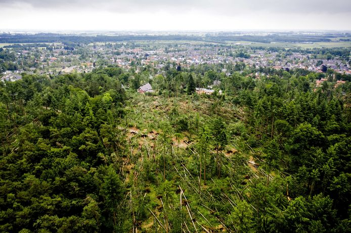 In natuurgebied Boswachterij Leersum waaiden honderden bomen om.