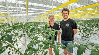 """300.000 tomatenplanten worden geplant in gigantisch serrecomplex in 'glazen rand': """"We willen hier jaarlijks 10 miljoen kilo tomaten te kweken"""""""