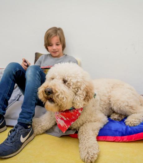 Pieter uit Hengelo is de leukste hond van Nederland