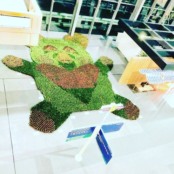 Met 10.000 vetplantjes heeft Adriënne Rombout een beer gemaakt bij de hoofdingang van het Erasmus MC.