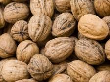 Nieuwe actie Landschapsbeheer: noten laten persen tot olie