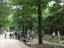 Populaire boom met zeldzaam vliegend hert is opeens weg: 'Echt schandalig, schofterig'