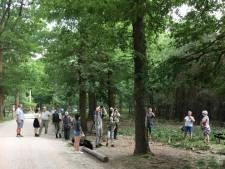 Populaire boom met zeldzame kever is opeens weg: 'Echt schandalig, schofterig'