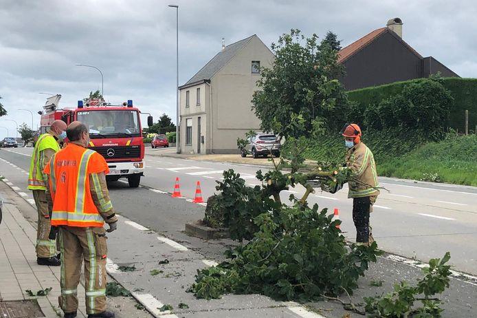 De brandweer ruimde een boom op ter hoogte van garage Boeykens langs de Oudenaardsesteenweg in Bambrugge.
