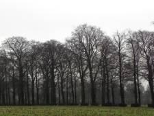 Natuurvereniging Heusden tegen villa's langs Kasteellaan