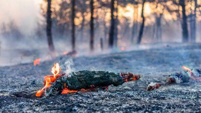 Ondanks oproep van honderden wetenschappers geen Europees verbod op verbranden van bomen voor hernieuwbare energie