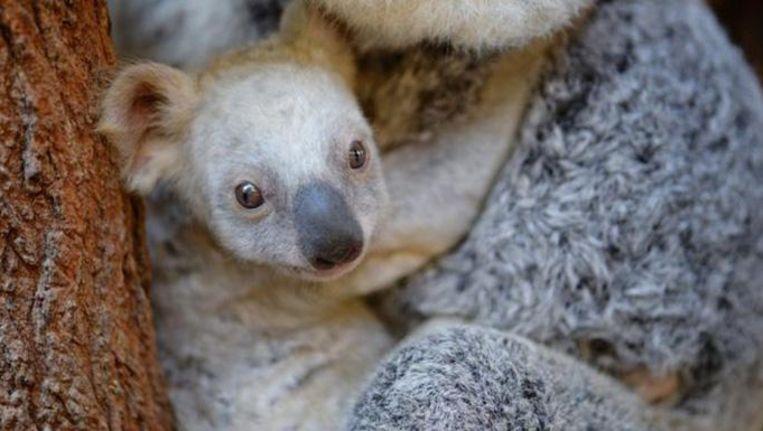 null Beeld Tourism Australia/Australia Zoo