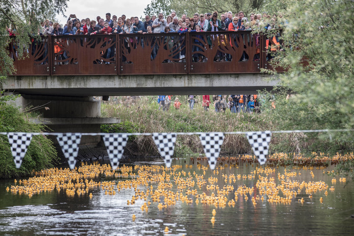 De Lucky Duck Race op de Dommel.