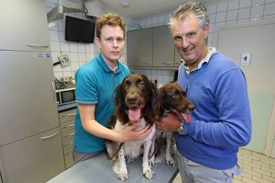 Grote zorgen bij Oosterhoutse dierenartsen: Ziekte van Weil geconstateerd bij honden