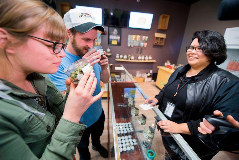 Toeristen ruiken aan de cannabisplantjes in de Green Pearl Organics winkel in Desert Hot Springs. Beeld AFP