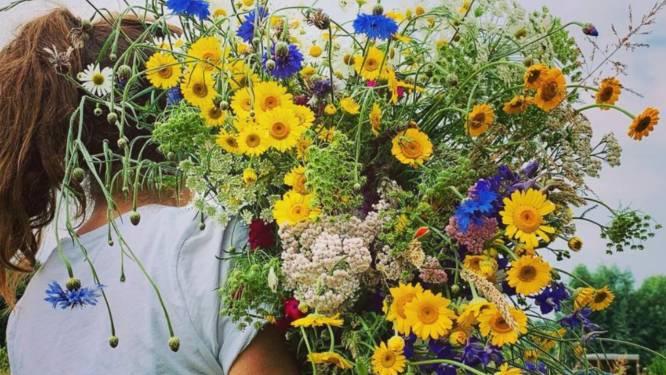 Overal openen pluktuinen waar je je eigen verse bloemen kan plukken: 6 adressen die je moet kennen