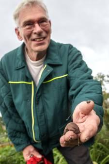 Schimmels en slakken kwellen de moestuin: 'Ik heb nog nooit zulke grote gezien'