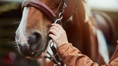 Brandweer en politie vangen twee loslopende pony's in Kemmel