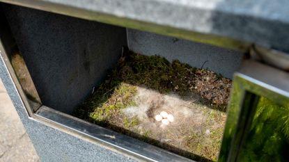 Koolmeesje maakt kunstig nest in brievenbus