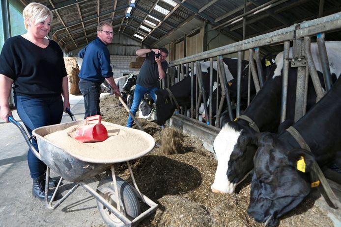 Jan en Ingrid Eijkelenboom aan het werk in de stal. Arie van der Wulp fotografeert.