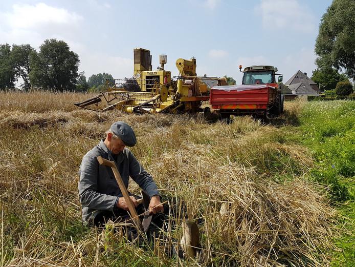 Jan van Vugt slijpt zijn zicht om vervolgens met de hand rogge te gaan oogsten.