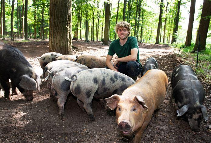 Josse Haarhuis tussen zijn varkens op landgoed Zuylenstein.