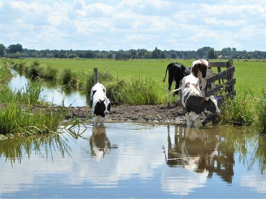 Zullen we gaan pootje baden of zwemmen? Het bleef bij pootje baden. Ouderkerk aan den IJssel.