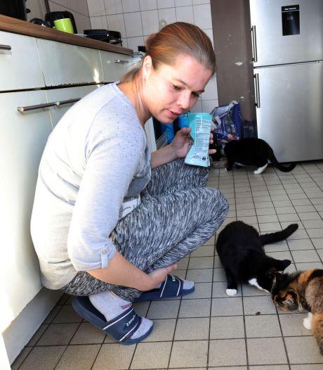 Kater Kitty is doodgeschoten met een luchtbuks: 'Het is alsof je je kind verliest'