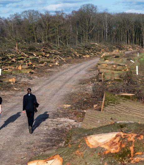 Boer mocht oude eiken in Wolfheze kappen: 'Het ging niet om een beschermde boomsoort'