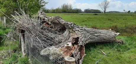 Ooievaarsnest slaat te pletter in Hoonhorst: kuikens in de dop dood