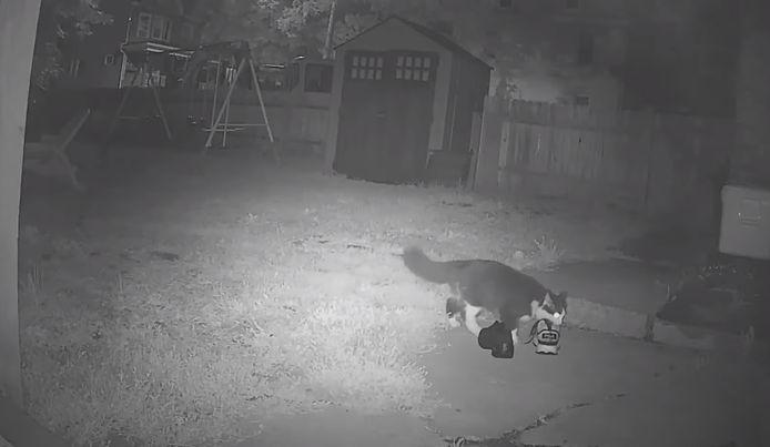 Een camera in de tuin betrapt Jordan op heterdaad. Wéér een nieuwe lading.