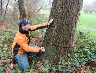 """Ultieme reddingspoging voor beschadigde bomen in natuurgebiedje: """"Als we niets doen zijn ze zeker verloren"""""""