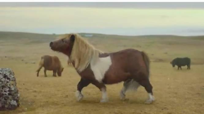 Pony doet moonwalk op Fleetwood Mac