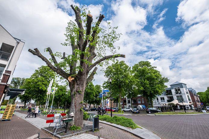 De monumentale boom aan het 14 Oktoberplein voor de PLUS  in Overloon is fors gesnoeid nadat er afgelopen weekend een zware tak van afbrak.