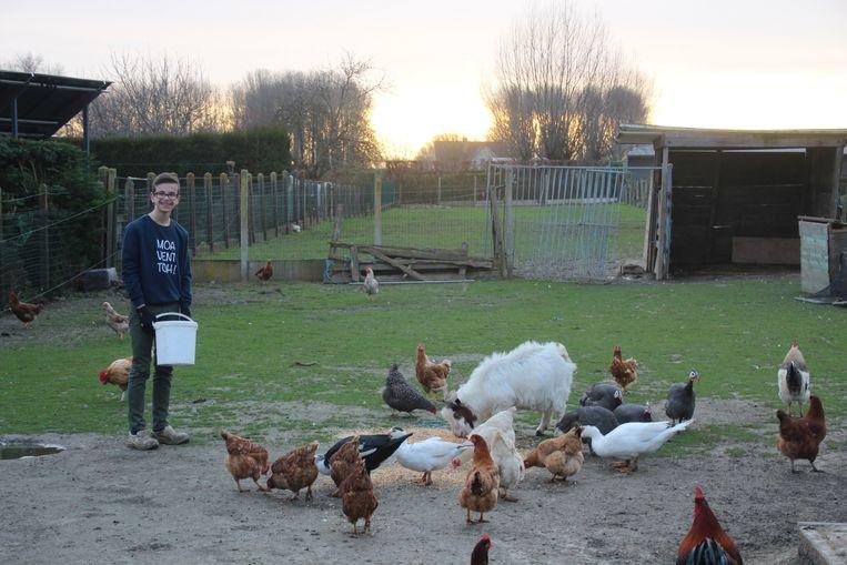 Milan De Craecker (14) uit Erondegem heeft niet alleen kippen, maar ook geiten, parelhoenders, eenden, kalkoenen en nog veel meer.